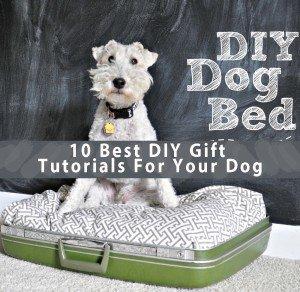 10 Best DIY Gift Tutorials For Your Dog
